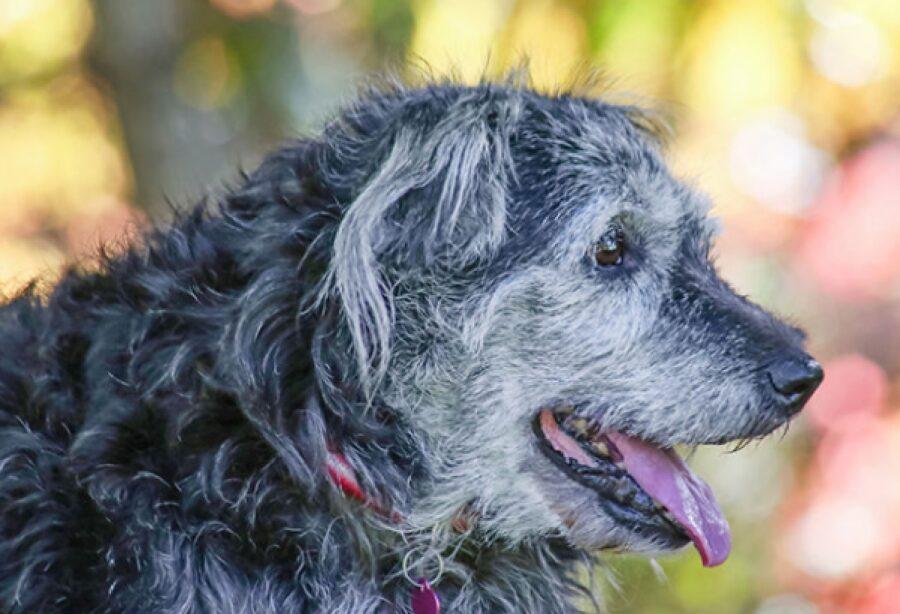 cane anziano tanta vitalità