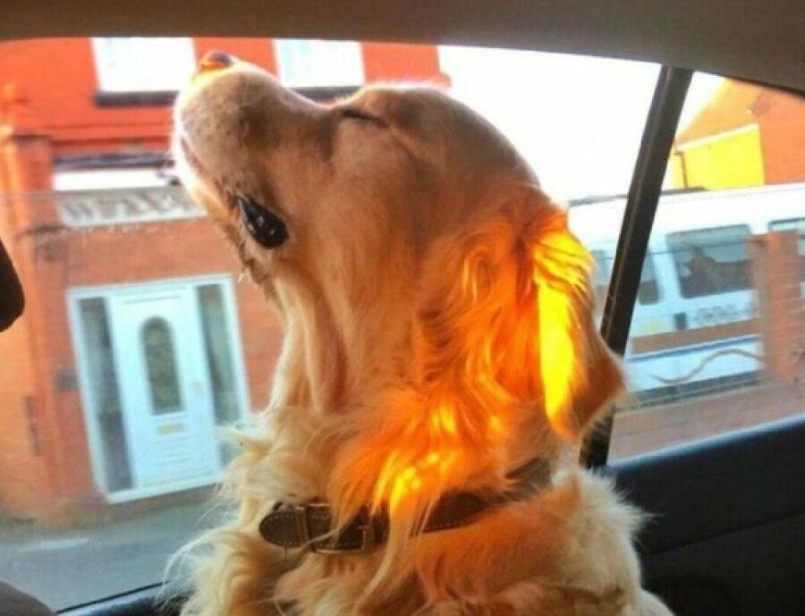 cane baciato dal sole