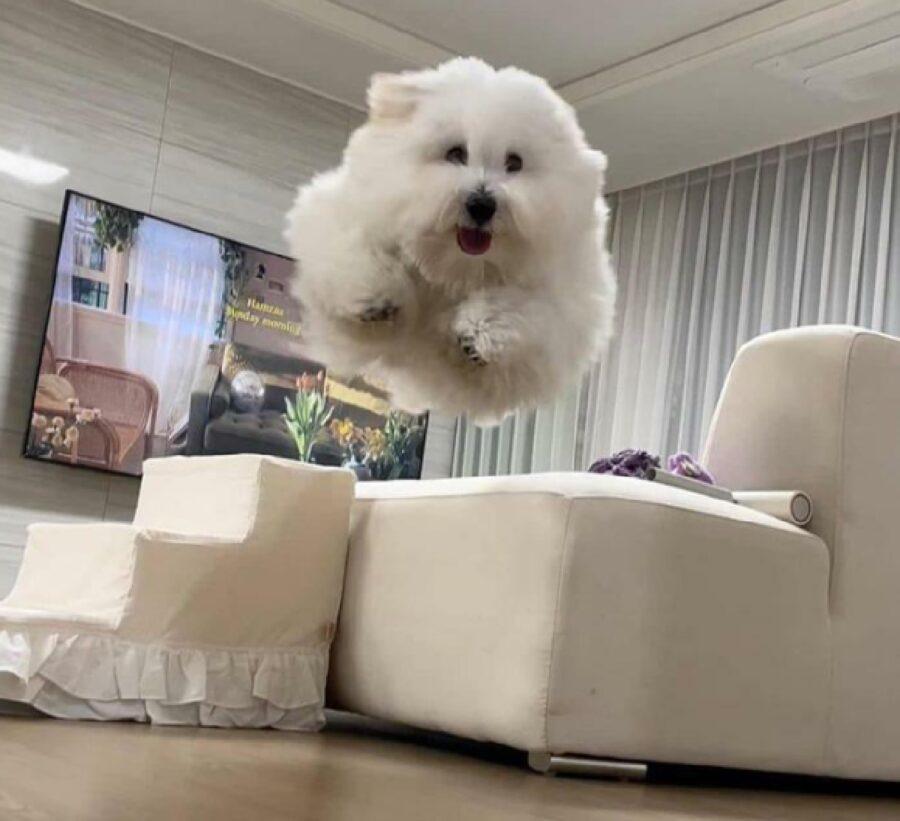 cane salto fermo aria