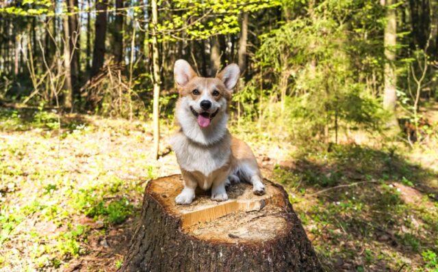 cuccioli e cagnolini che stanno passano del bel tempo