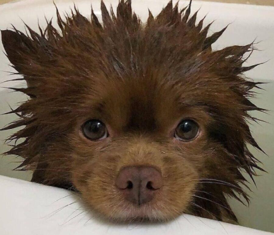 cagnolino ha appena finito il bagno