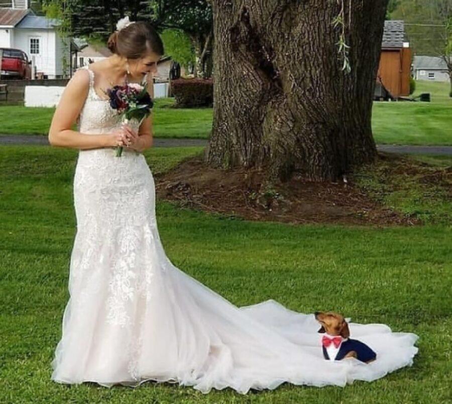 cane marito di una sposa