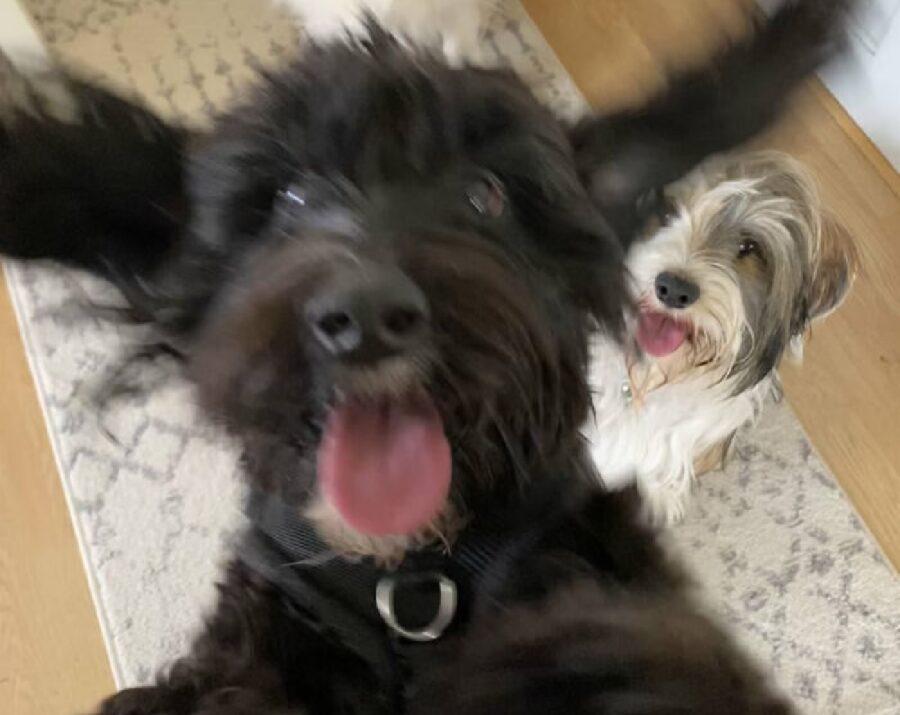 cane foto sfocata per gioia