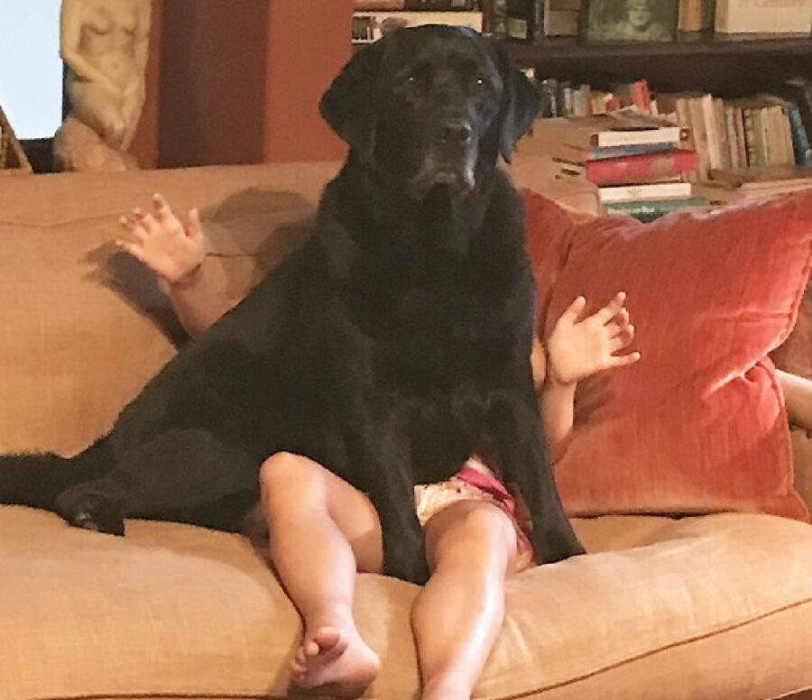 cane sopra bambina