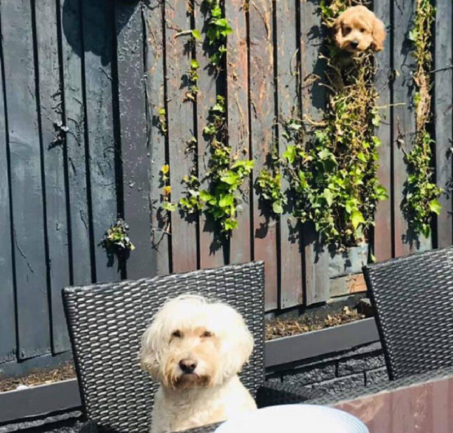 cane osserva suo amico