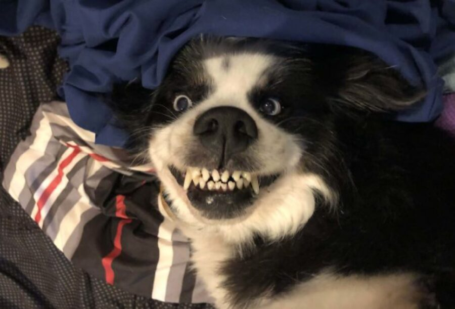 cane denti troppo paurosi