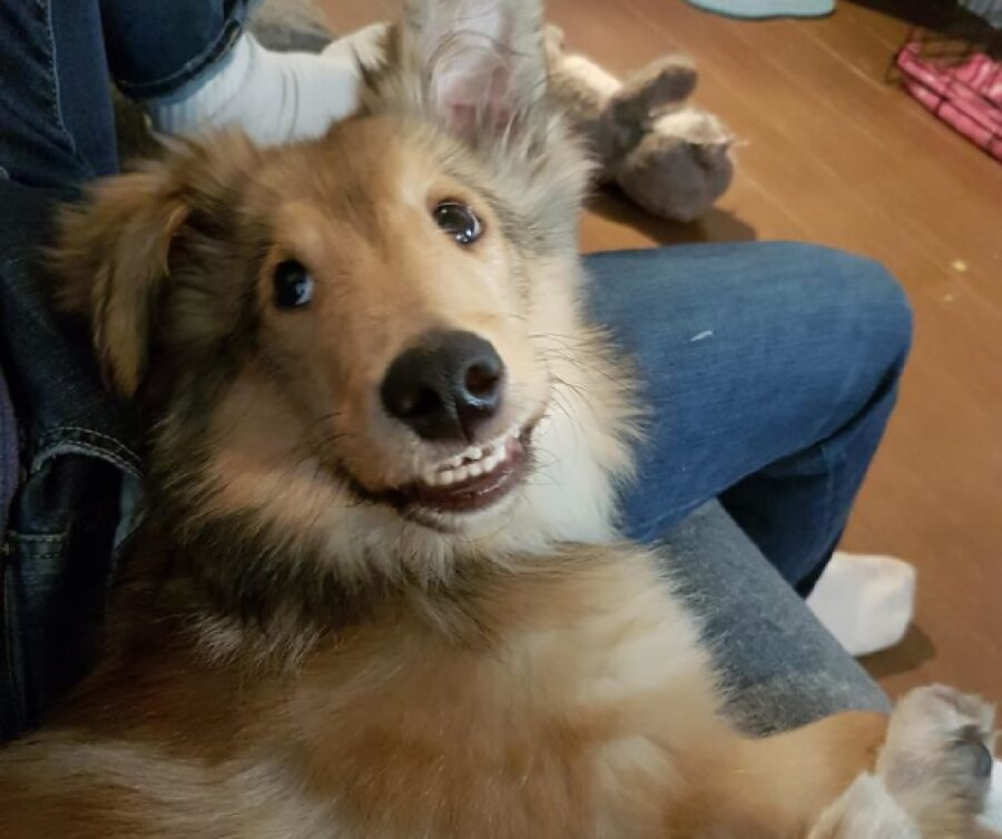 cane sorride per poco