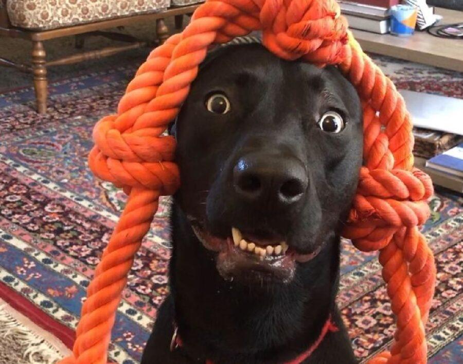 cane con una corda in testa