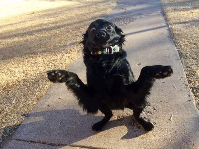 cucciolo nero buffo