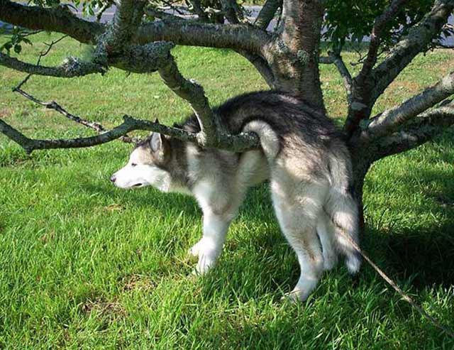 cane intrappolato