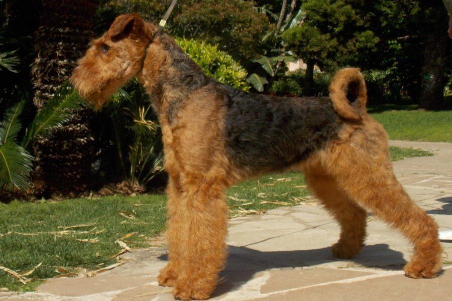cane di profilo