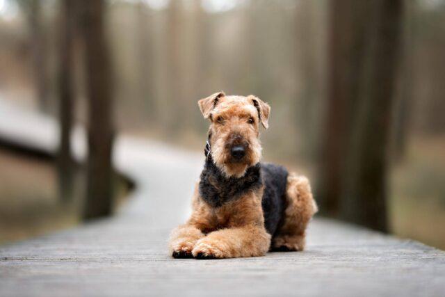 cane su sentiero