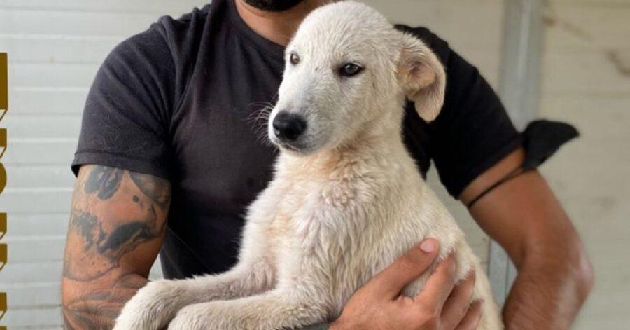 cane in braccio ad un volontario