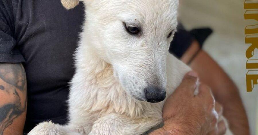 cagnolino dal pelo bagnato e bianco