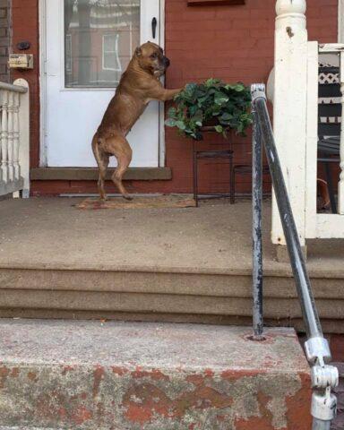 cane aspetta davanti casa