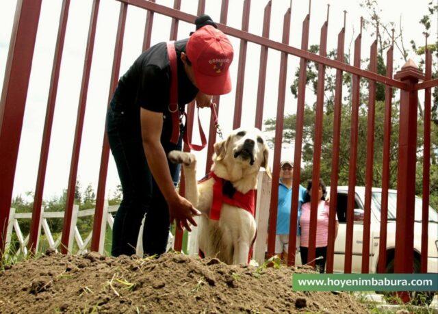 cane soccorritore
