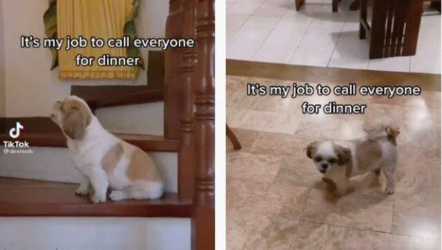 cane che avvisa