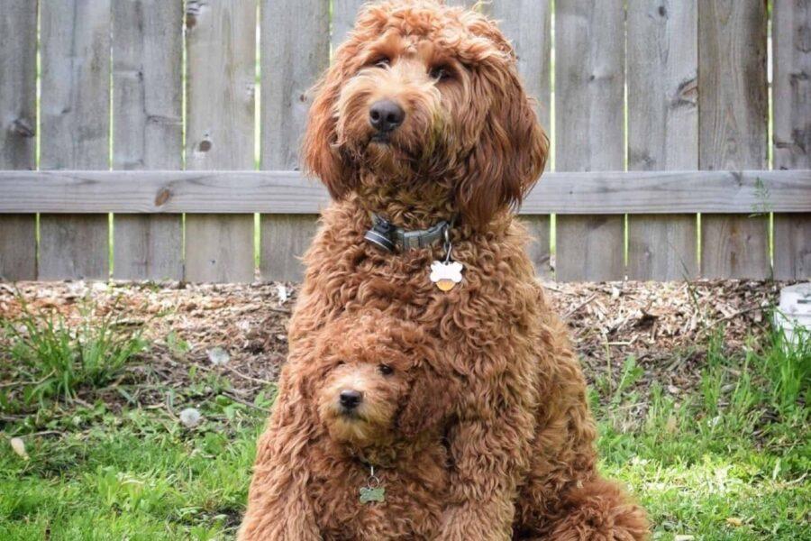 mamma insieme al suo cucciolo di cane