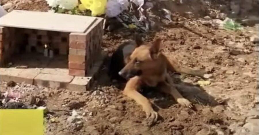cane sulla tomba del padrone