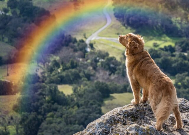 cane ponte arcobaleno
