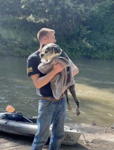 cane in braccio coperto