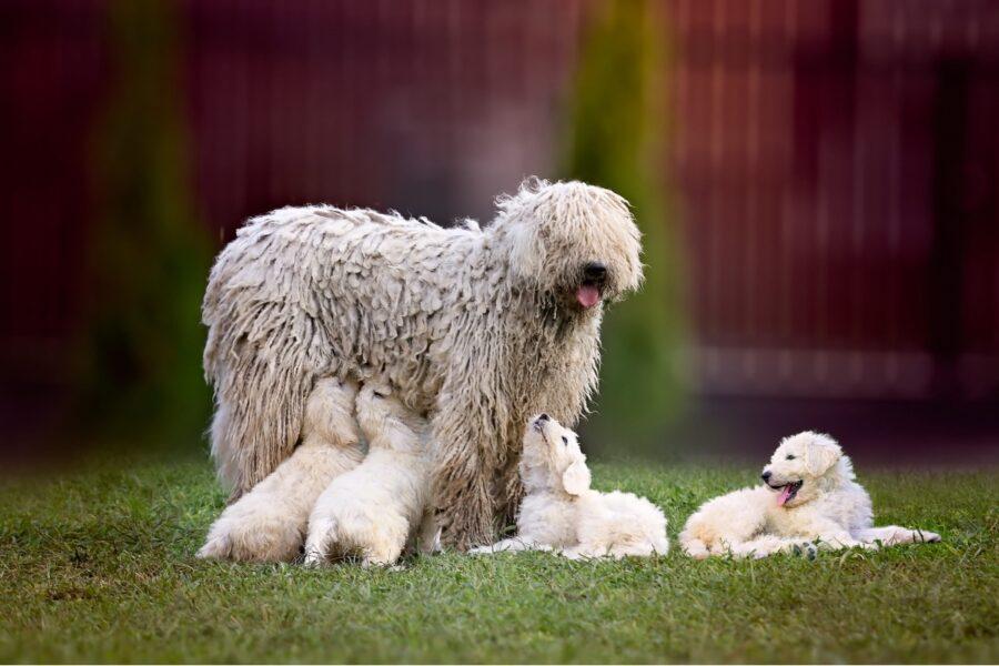 mamma con i cuccioli di cane