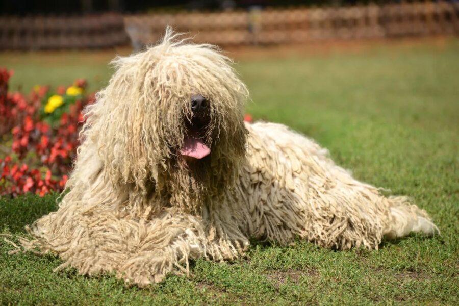 cane a pelo lungo seduto
