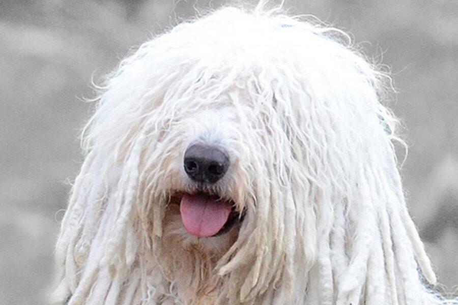 cane con gli occhi coperti