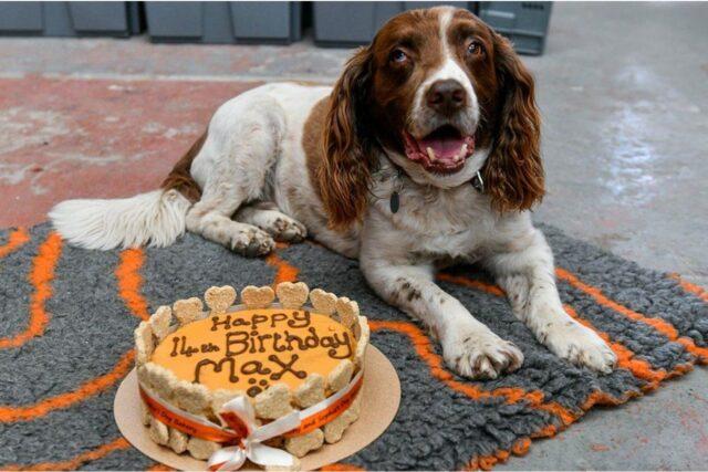 cane festeggia