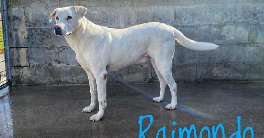 cane dal pelo completamente bianco