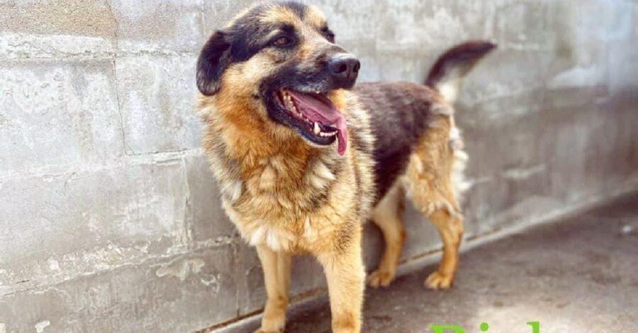 cane nel canile di Frosinone