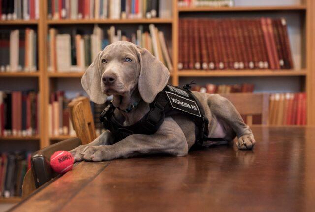 cane al museo