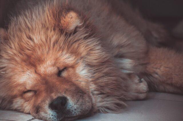 cane con il pelo bagnato