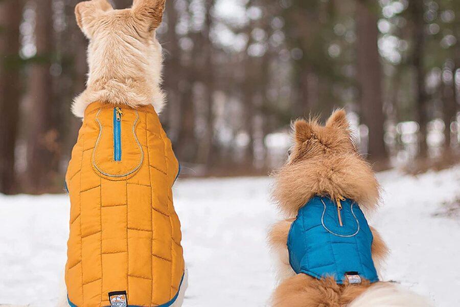 cani con giubbotto