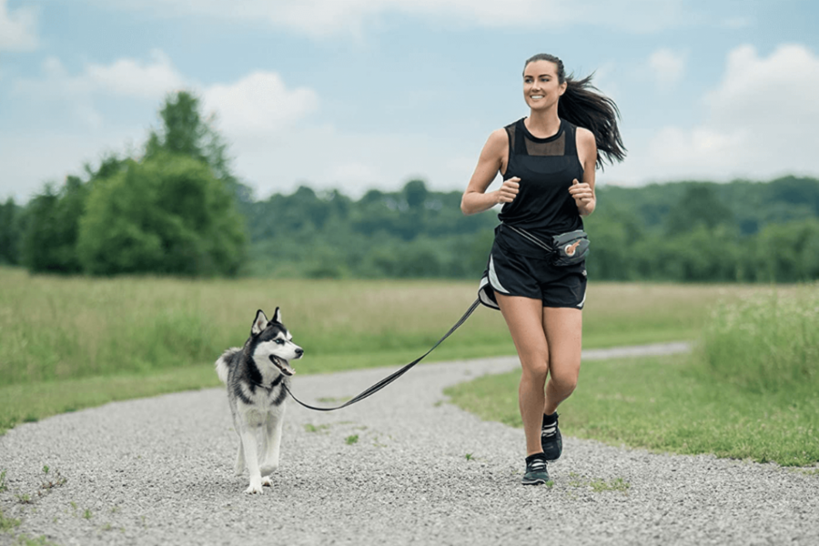 cintura da jogging per il cane