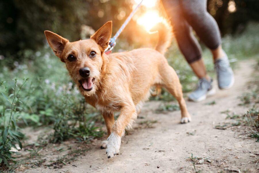 fare jogging col cane