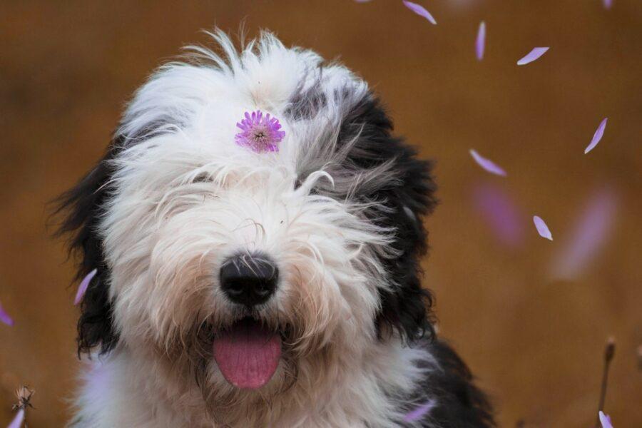 cane coi fiorellini