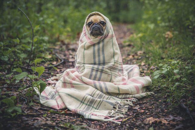 Carlino avvolto in una coperta