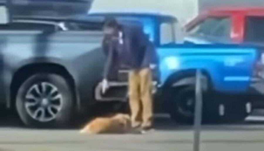 storia di un cane preso a pugni