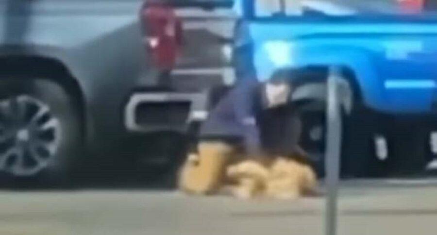 cane golden retriever preso a pugni