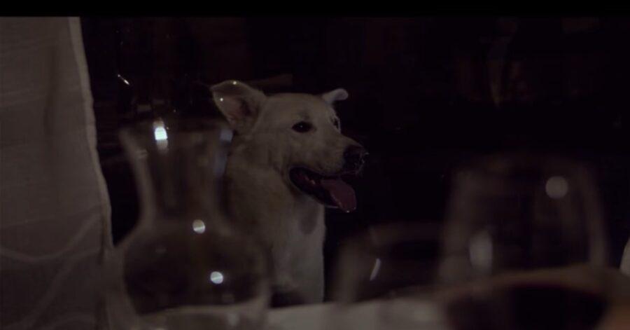 cortometraggio in memoria di un cane ucciso