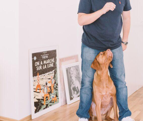 cane e addestramento