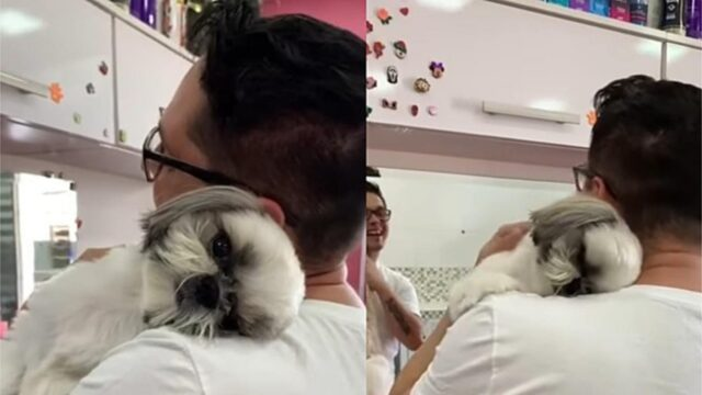 toelettatore abbraccia cane