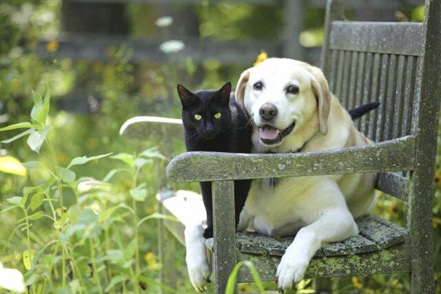 cane e gatto su panchina