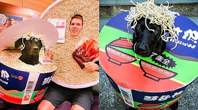 cane con costume da noodles