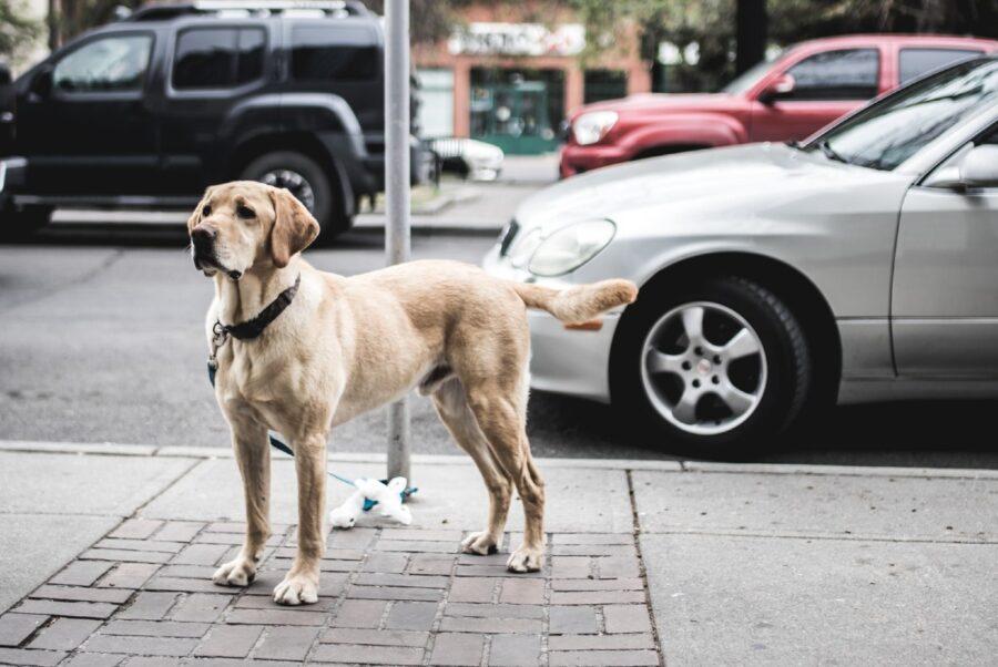 cane che attende