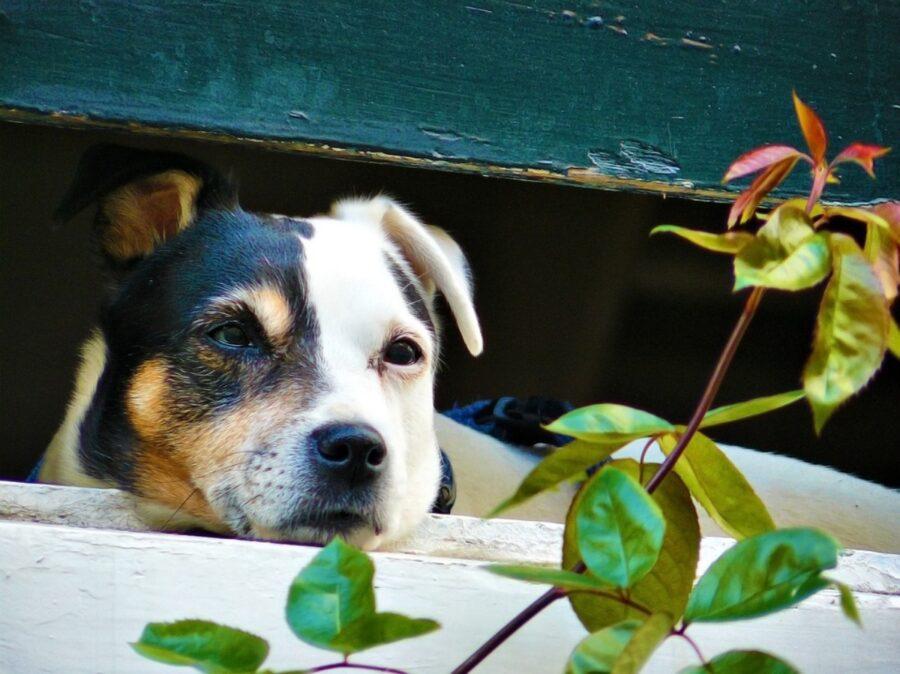 cane affacciato persiana