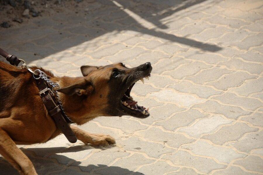 cane aggressivo al guinzaglio