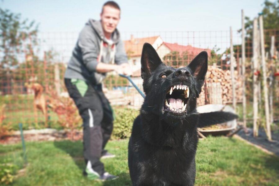 cane nero in atteggiamento aggressivo