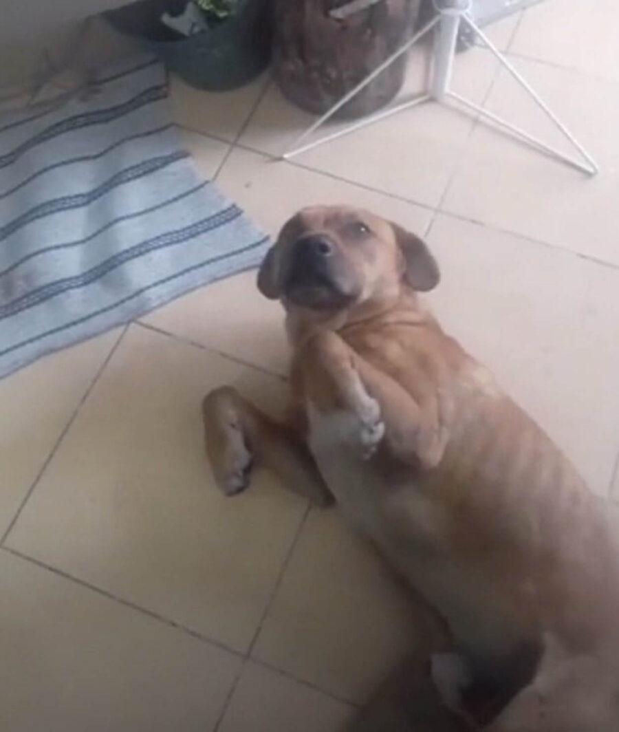 cane in posizione di sottomissione
